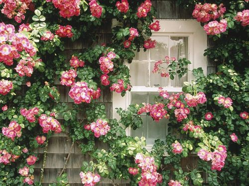 Sweet Rose Sanctuary